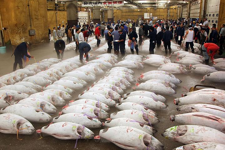 cho ca tsukiji tokyo