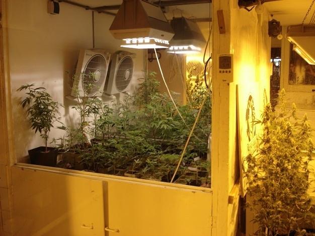 bao tang Hash Marihuana and Hemp