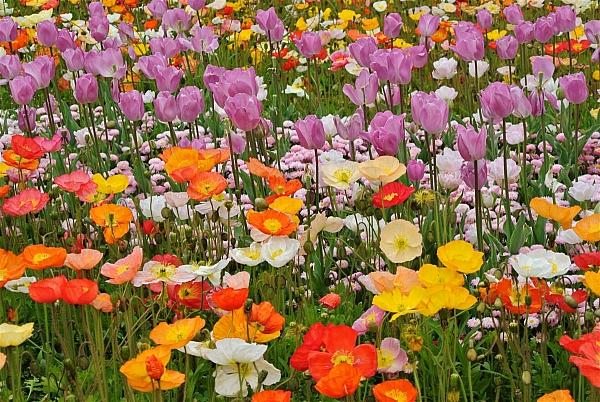 le hoi hoa floride 9