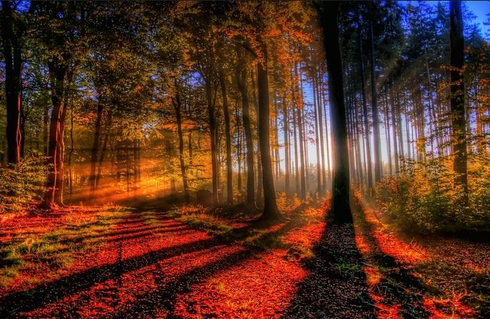 Photo of Vẻ đẹp đầy bí ẩn của Rừng Đen ở nước Đức